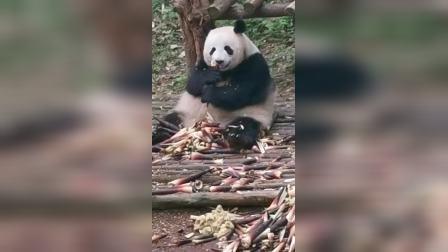 大熊猫基地🌴🌴🌴