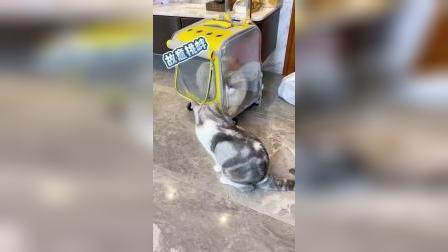 是什么竟然让猫猫主动愿意剪指甲