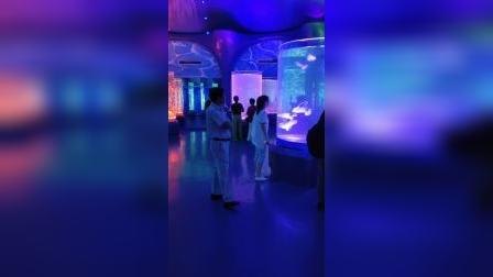 2019.11.9海洋馆水母大世界