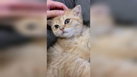 猫猫也有心事,你能猜得到吗