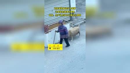 奶奶遛狗被误认为遛猪 一时竟分不清是猪是狗