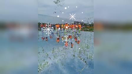 芜湖天空之镜百亩花海