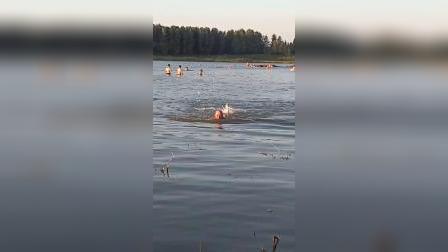 五十年后重游泳