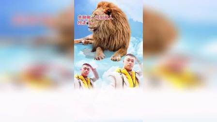 AE特效视频动画制作搞笑狮子大开口
