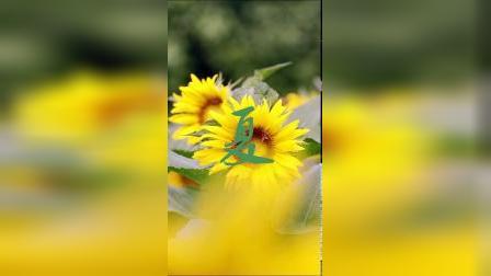 这个五一难得一见的花。