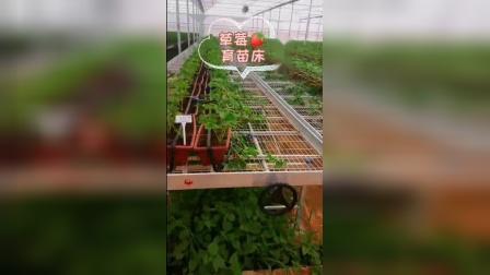 甘肃定西草莓育苗床生产厂家-供货及时