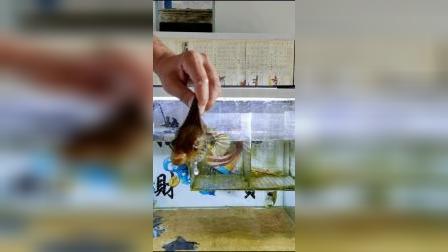 这样的鱼你们见过吗?