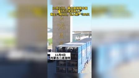 蒙古国捐赠的羊已入境1.6万只,已开始屠宰!