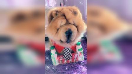 宠物:这狗子开心的冒鼻泡吖