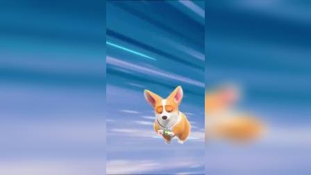 飞狗:这么贴心的狗子你们想要吗?
