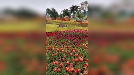 云台花园花花世界