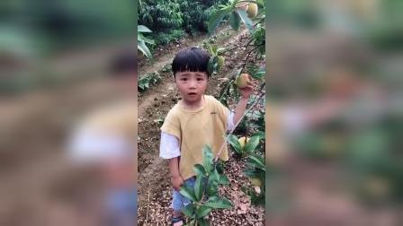少儿:我们一起摘桃子