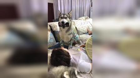 二狗子:主人是真的狗