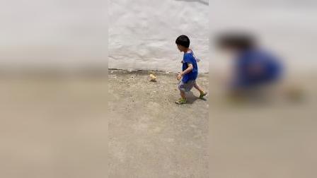 少儿:我的小鸭子跑出来了