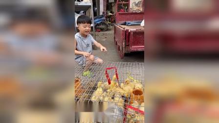 少儿:小鸭子太可爱了