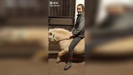 完全征服骑小马美女骑马