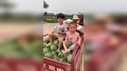 少儿:今天有好多西瓜