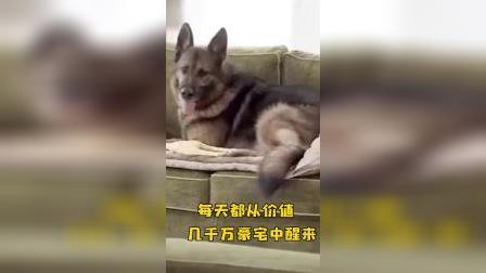 世界上最有钱的狗