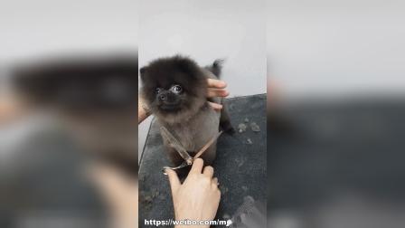 Puppies Grooming Dance
