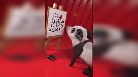 猪小迈:第一次见熊猫猪,太稀奇啦!
