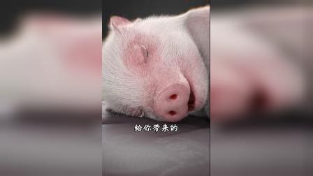 猪小迈:学生时代的清晨,你有过这样的经历吗?