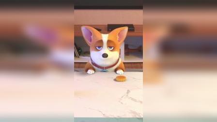 小柯基:这是我的专属宠物月饼