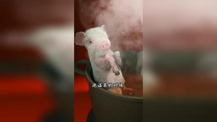冬至了,煮全猪补补