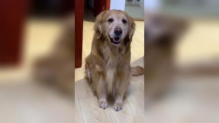 狗狗的眼神真是小戏精一枚,你们看完别笑
