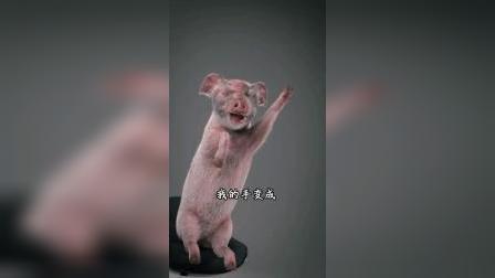 搞笑动漫:谁家的白菜这么难拱啊猪猪我好难啊!