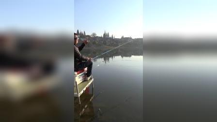杨巨物--野钓道桥河