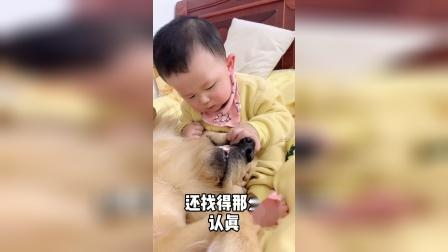有孩子,绝对不能养狗,费狗