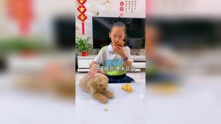 童年趣事:吓得小狗狗不敢吃了