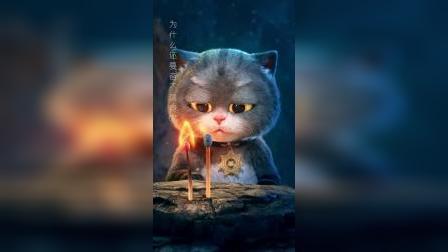 斑布猫:错过一个人有多疼!