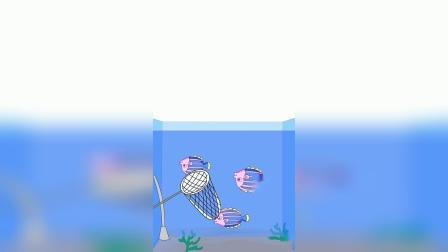 搞笑动画:这鱼是不是有点傻