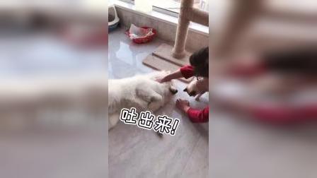 有狗的家庭是不是都这样