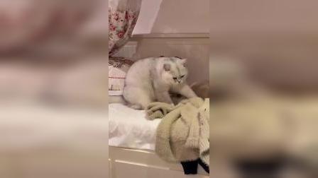 这胖猫喜欢给衣服踩奶