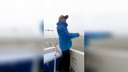 蓝旗鱼路亚 | 满海的鲈鱼!扔下去就咬是什么体验?