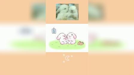 懒懒兔:天哪~兔兔秀恩爱~