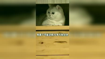 小猫咪就是要胖一点才可爱,你们说对吧