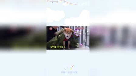 孙红雷遇到宠物神级撞脸黄渤,笑翻全场!