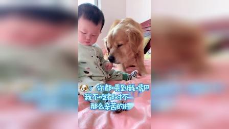 趁主人不在,狗狗造反了