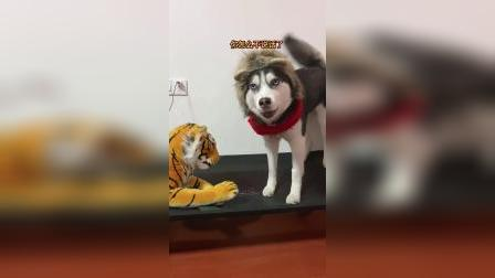 给狗子看看,真老虎