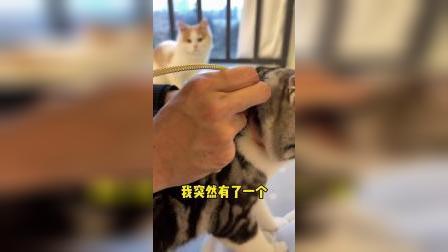 我发现了一个,猫遛猫的办法