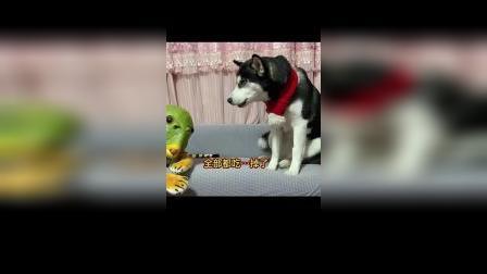 鸡腿被鱼头怪吃掉,狗子会有什么反应?