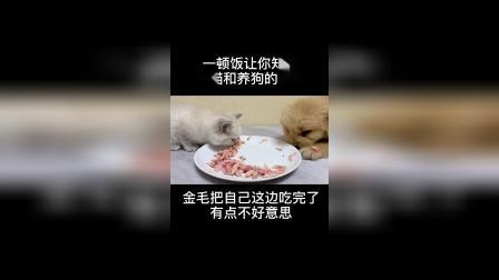 养猫和养狗的区别,看懂了吗?