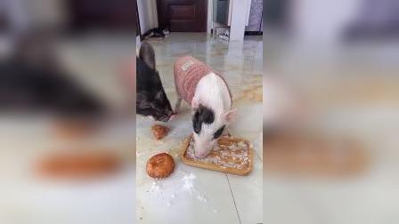 养猪,果然不能铺瓷砖