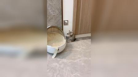 这么可爱的小猫咪,能有什么坏心眼