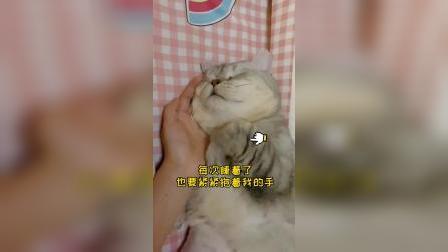能有这么暖的,小猫咪足够了
