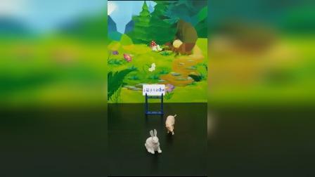 你听过兔子和猪赛跑的吗?