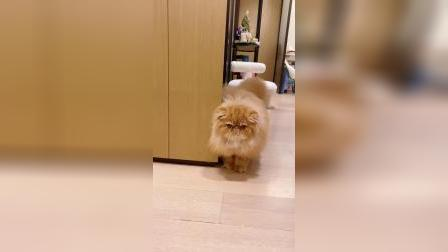 那么可爱的小猫咪,就问你喜不喜欢